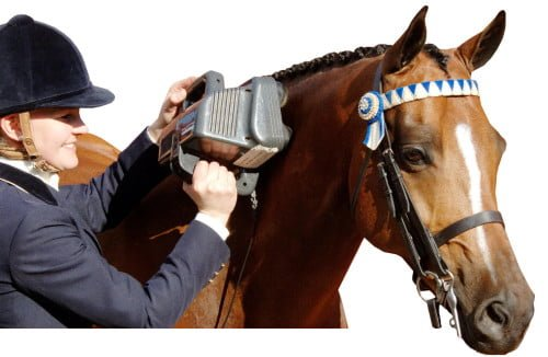 Equine Pro on horse